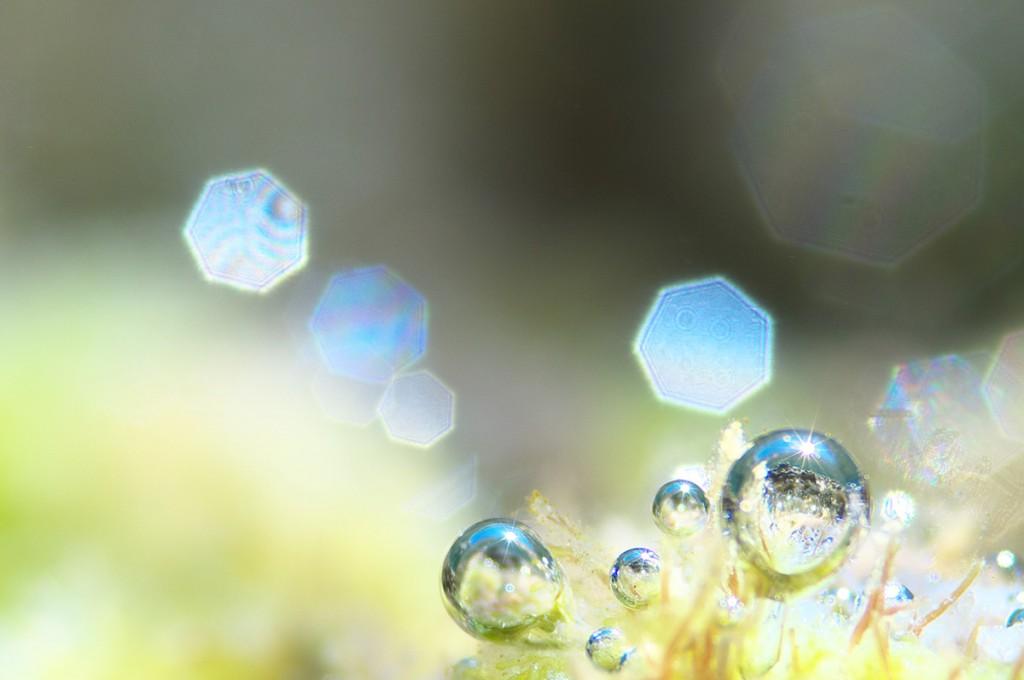 海藻が発する酸素の気泡