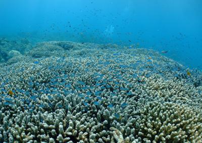 トロピカルな海