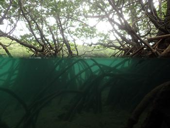マングローブ域半水面