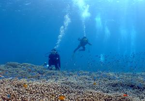 サンゴの上