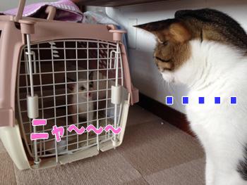 デカ猫とチビ猫のご対面
