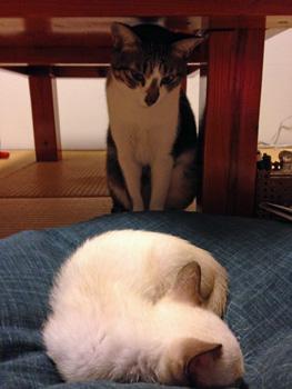 チビ猫とデカ猫