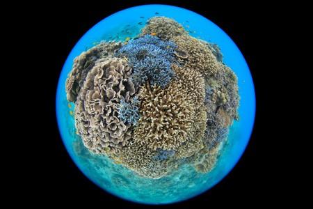 円周魚眼レンズでサンゴ撮影