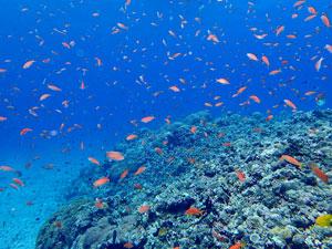 トロピカルな石垣島
