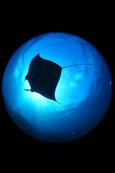 円周魚眼でマンタ