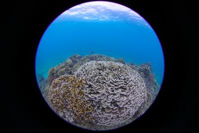 円周魚眼レンズでサンゴ