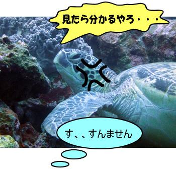 寝てるウミガメ