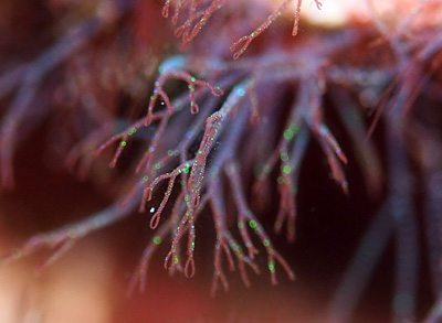 綺麗な海藻